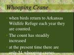 whooping crane1