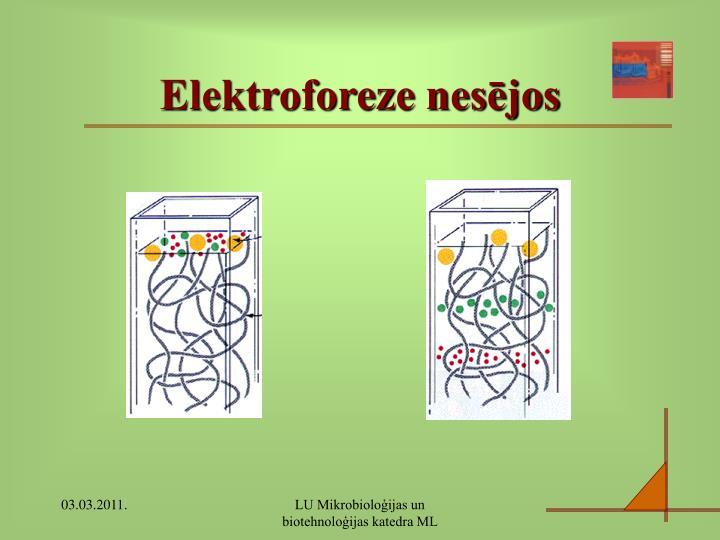 Elektroforeze nesējos
