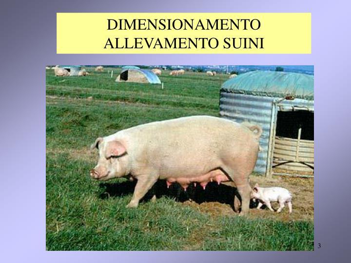 DIMENSIONAMENTO ALLEVAMENTO SUINI