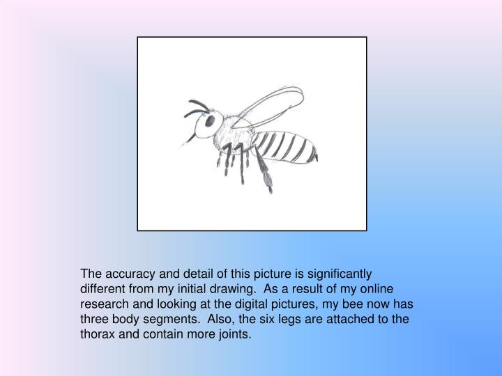 The accuracy and detail of this picture is significantly different from my initial drawing.  As a result of my online research and looking at the digital pictures, my bee now has three body segments.  Also, the six legs are attached to the thorax and contain more joints.