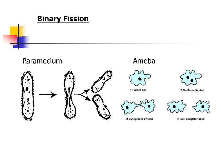 Binary Fission