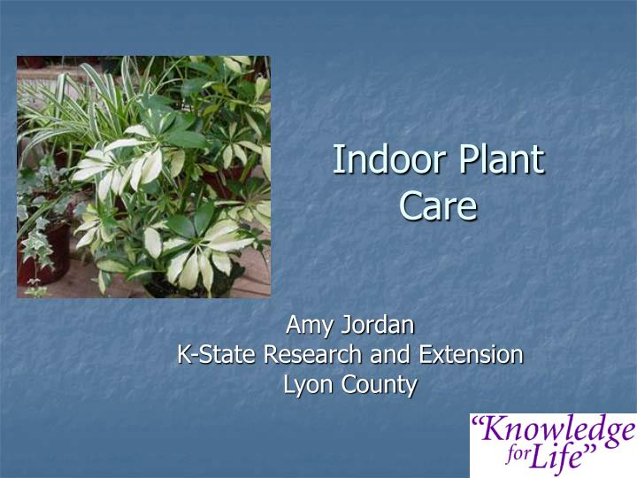 Ppt indoor plant care powerpoint presentation id 5487951 for Indoor plant maintenance