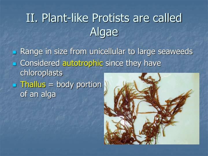 II. Plant-like Protists are called Algae