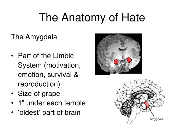 The anatomy of hate