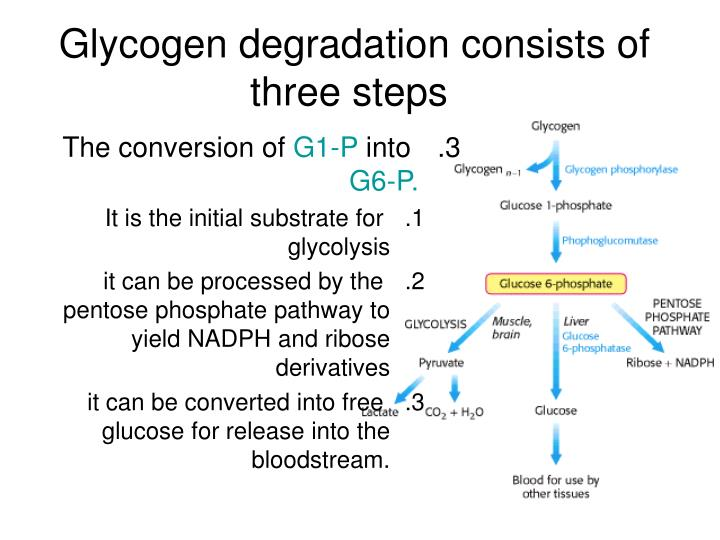 Glycogen degradation consists of three steps