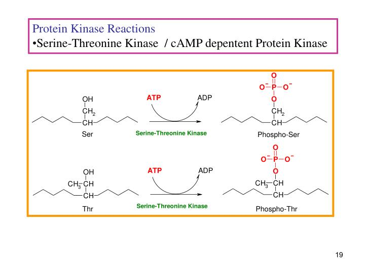 Protein Kinase Reactions