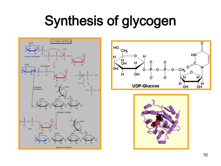 Synthesis of glycogen