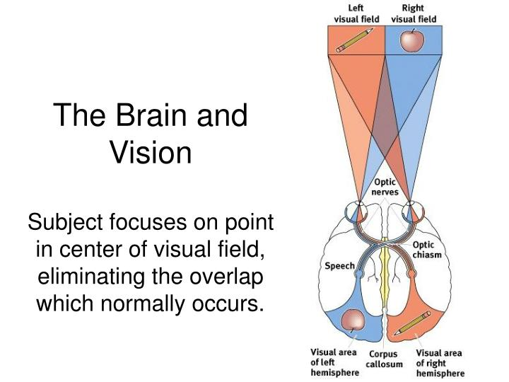 The Brain and Vision