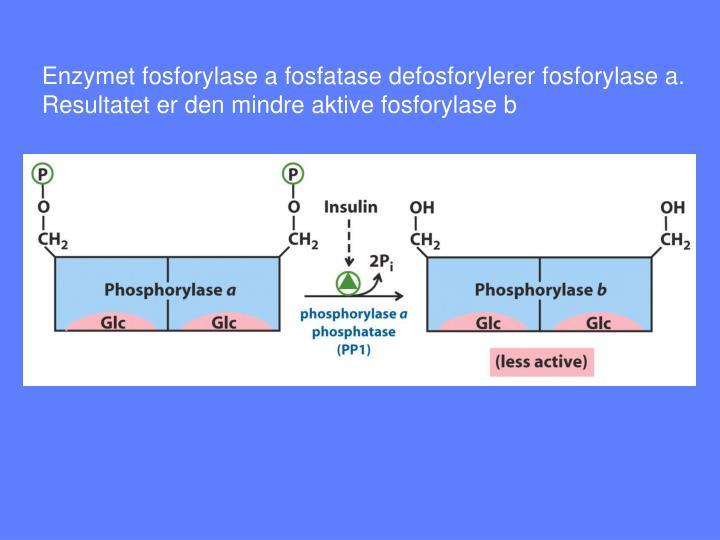 Enzymet fosforylase a fosfatase defosforylerer fosforylase a.
