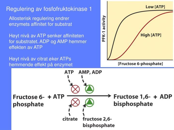 Regulering av fosfofruktokinase 1