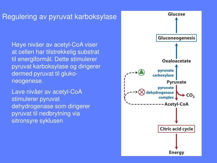 Regulering av pyruvat karboksylase
