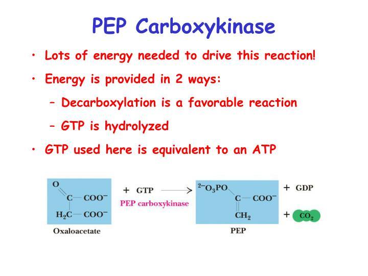 PEP Carboxykinase