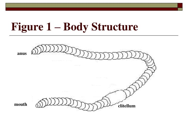 Figure 1 – Body Structure