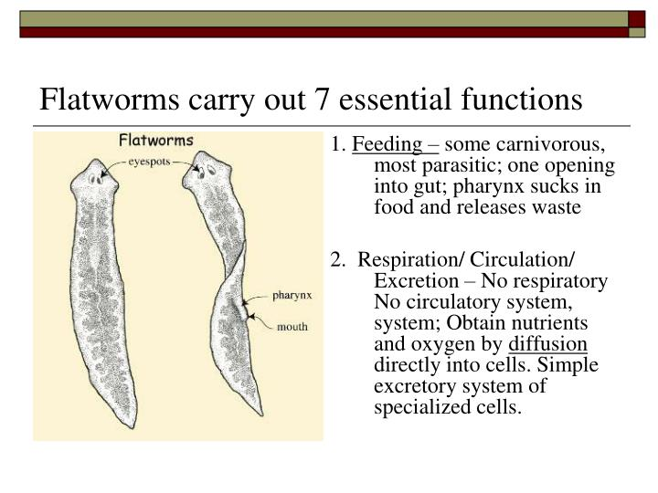 Flatworms carry out 7 essential functions
