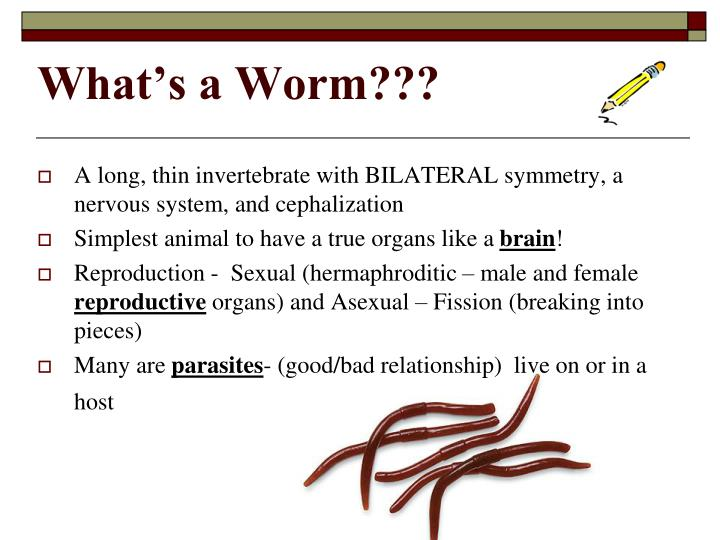 What's a Worm???