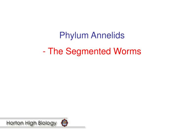 Phylum Annelids