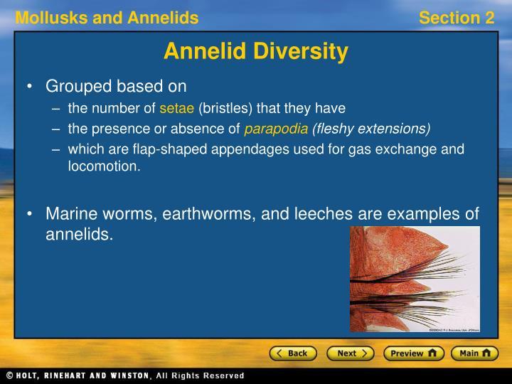 Annelid Diversity