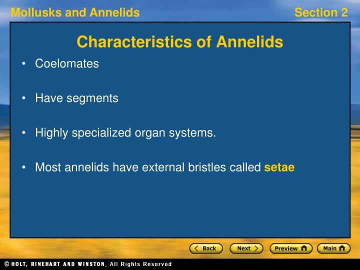 Characteristics of Annelids