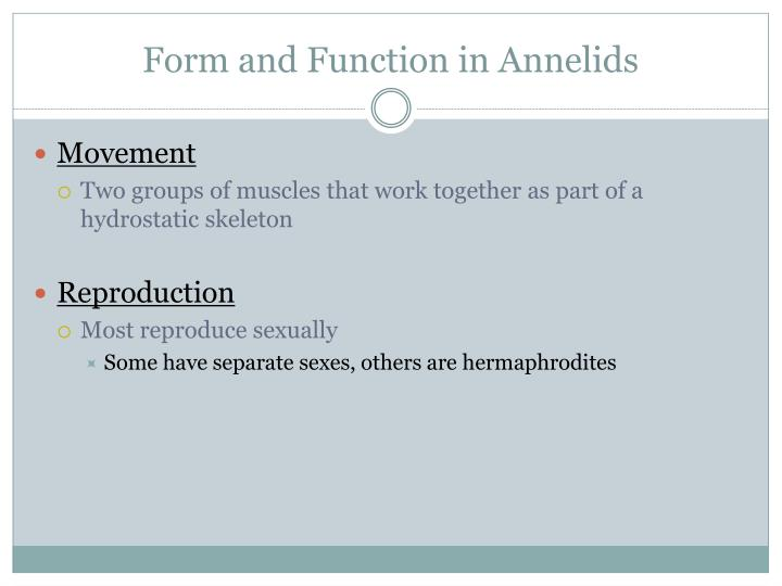 Form and Function in Annelids