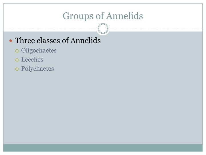 Groups of Annelids