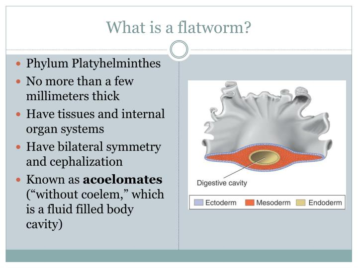 What is a flatworm