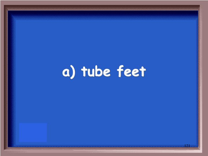 a) tube feet