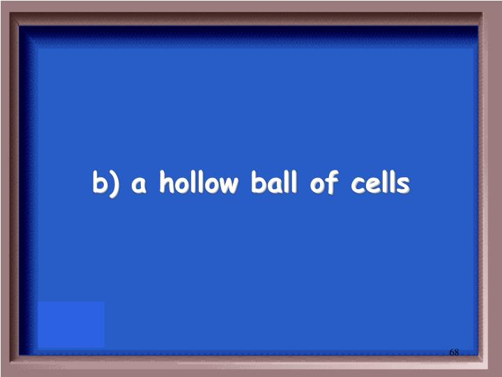 b) a hollow ball of cells