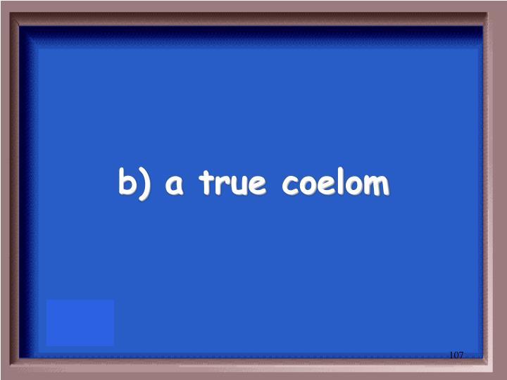 b) a true coelom