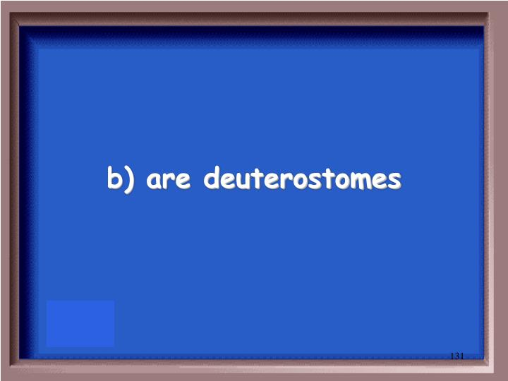 b) are deuterostomes