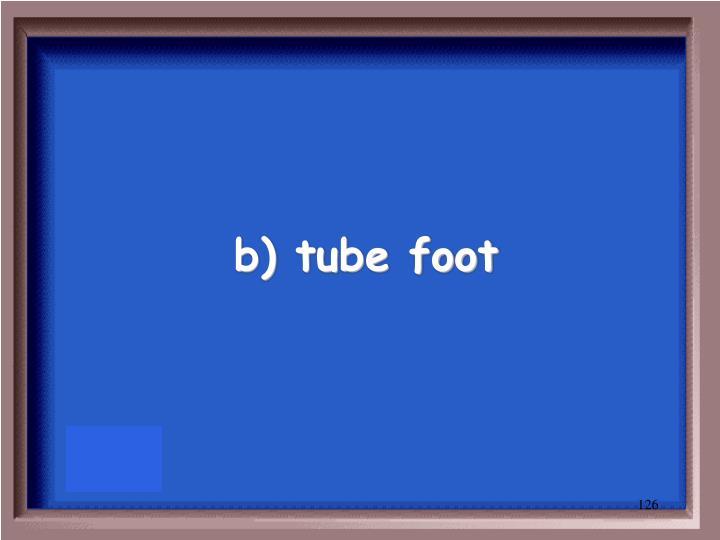 b) tube foot