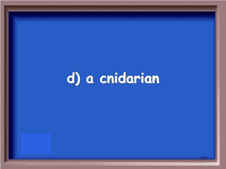 d) a cnidarian