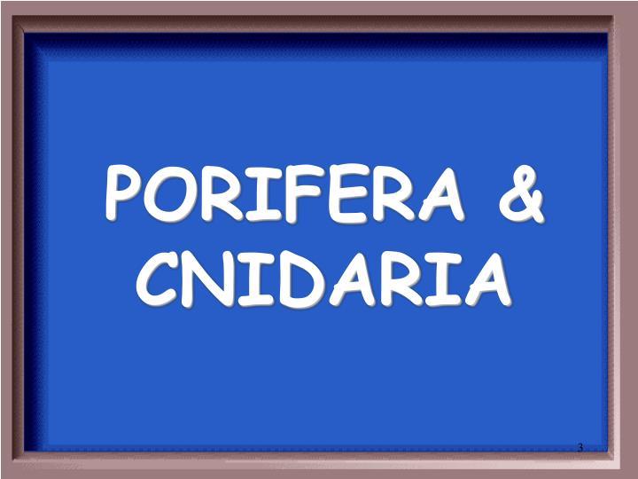 PORIFERA & CNIDARIA