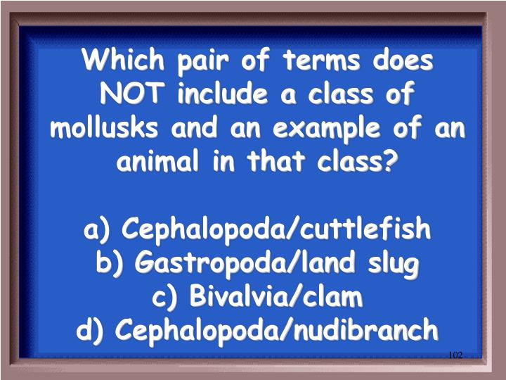 Which pair of terms does NOT include a class of mollusks and an example of an animal in that class?