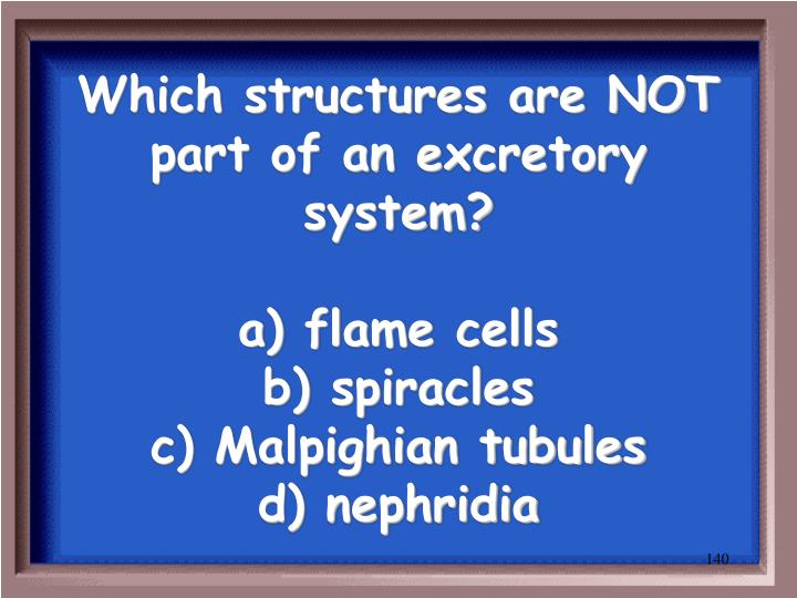 Which structures are NOT part of an excretory system?