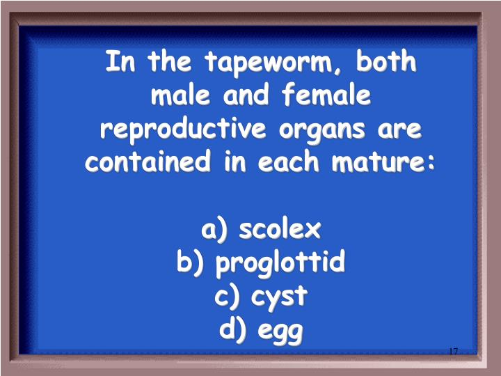 In the tapeworm, both male and female reproductive organs are contained in each mature: