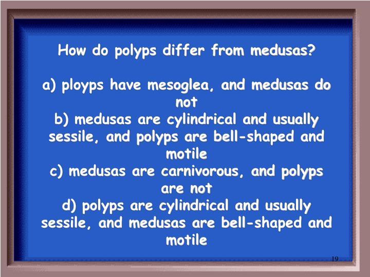 How do polyps differ from medusas?