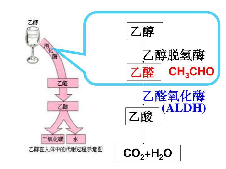 乙醇脱氢酶