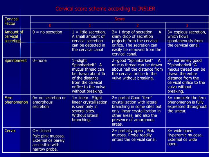 Cervical score scheme according to INSLER
