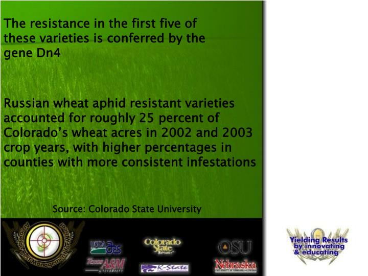 The resistance in the first five of these varieties is conferred by the gene Dn4