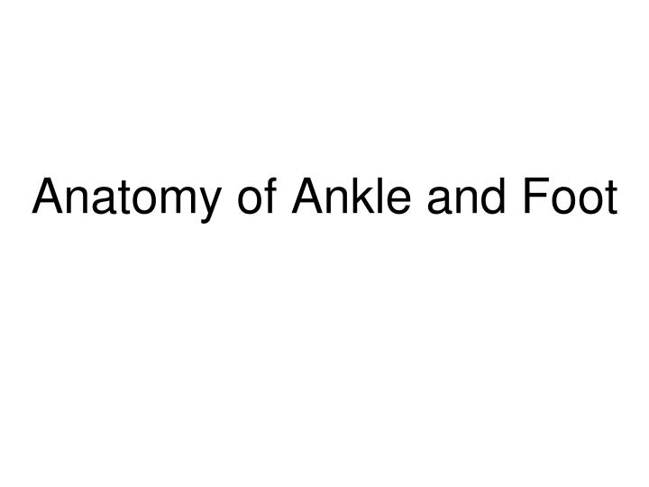 anatomy of ankle and foot