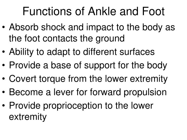 Functions of Ankle and Foot