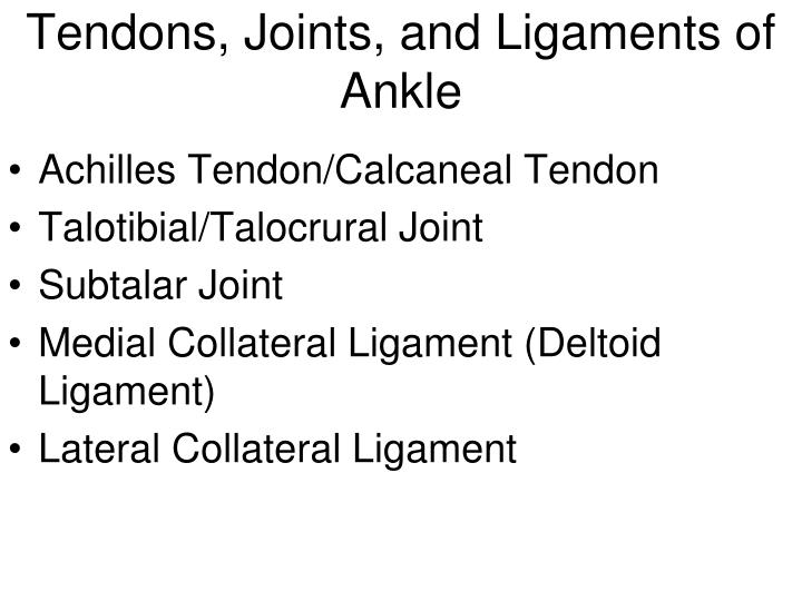 Tendons, Joints, and Ligaments of Ankle