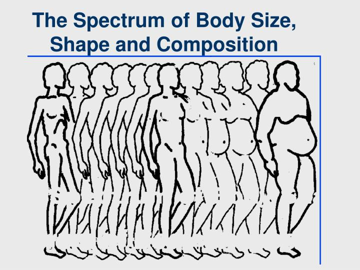 The Spectrum of Body Size, Shape and Composition
