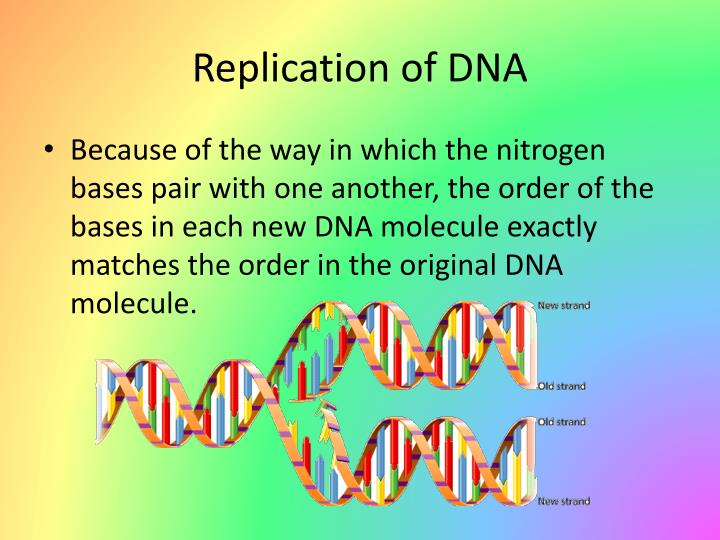 Replication of DNA