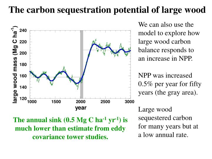 The carbon sequestration potential of large wood