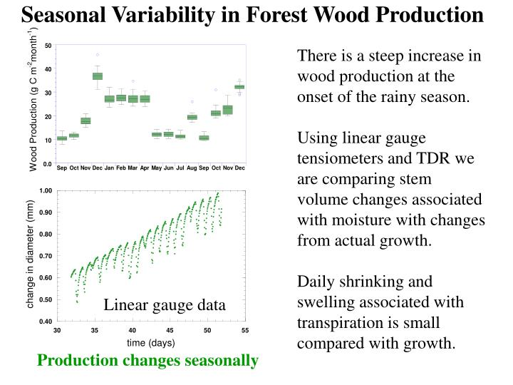Seasonal Variability in Forest Wood Production