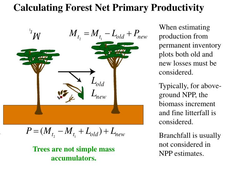 Calculating Forest Net Primary Productivity