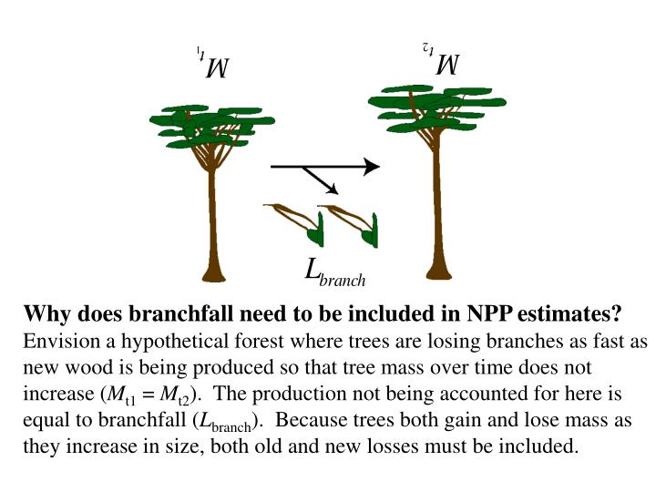 Why does branchfall need to be included in NPP estimates?