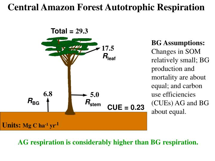 Central Amazon Forest Autotrophic Respiration