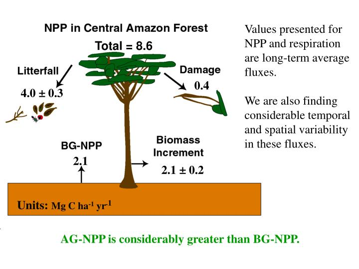 Values presented for NPP and respiration are long-term average fluxes.